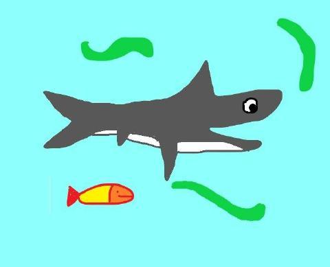 大白鲨的考验